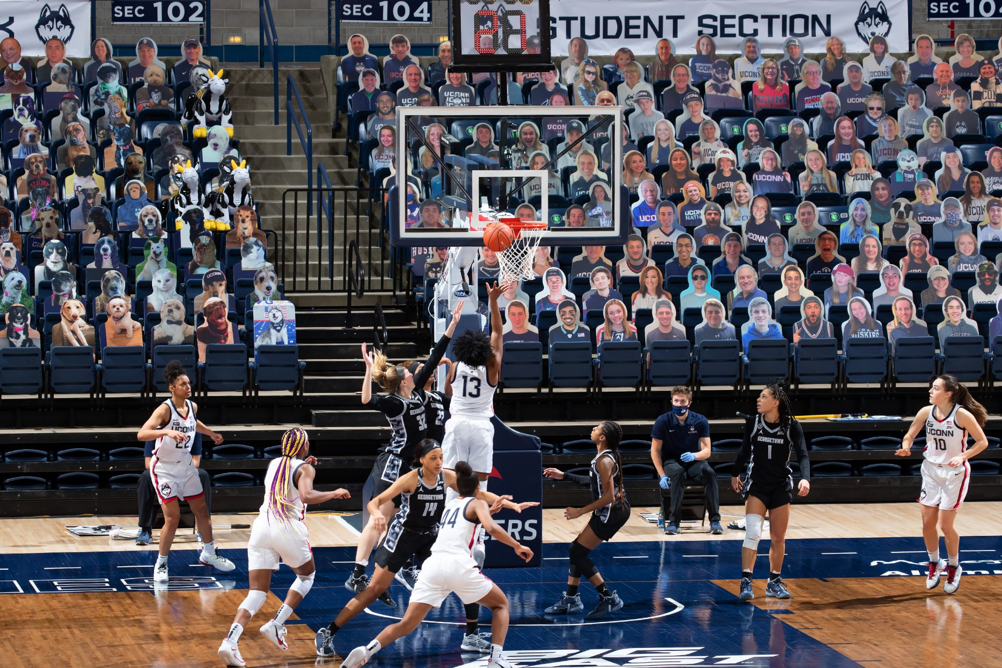 UConn women's basketball team playing during COVID-19 pandemic with cardboard cutouts of people and animals in stands